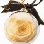 Rose in a Plastic Round