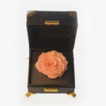 Pink Peach Preserved Rose Gift
