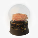 Beige Preserved Rose in Round Glass
