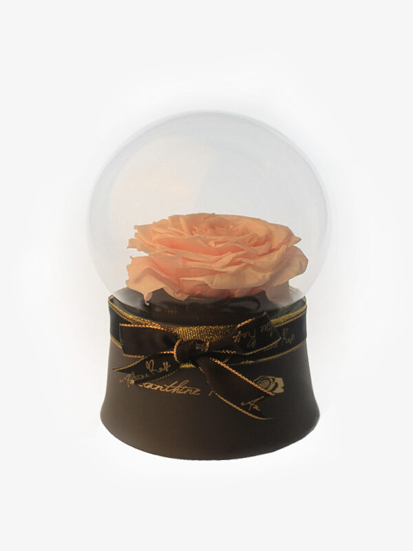 Beige Preserved Rose in Round Glass