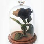 Black Rose Delivery Kuala Lumpur