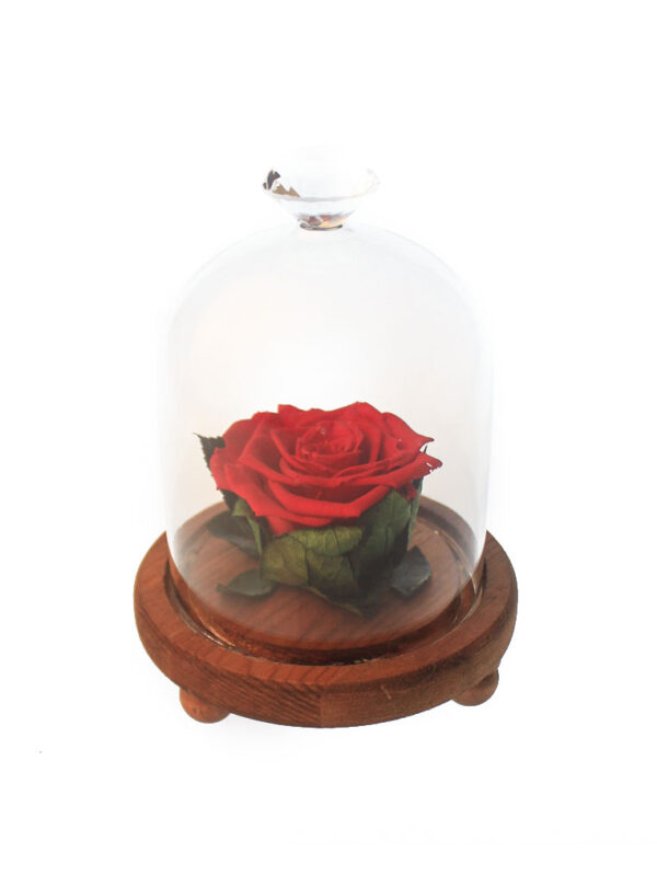 Mini Bell Jar with Rose