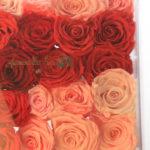 Rose box Infinite by Amaranthine Rose