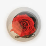 Preserved Rose in Glass Globe red by Amaranthine Rose