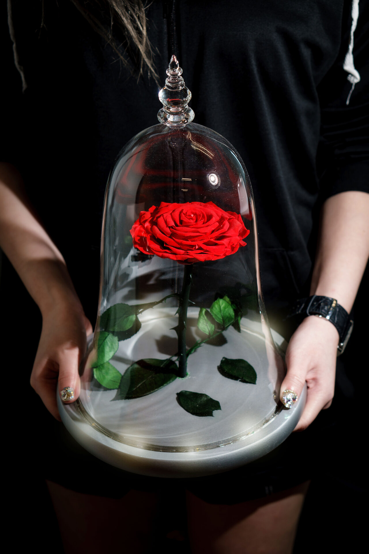 Beauty and The Beast Rose Jar Dome Glass buy Online